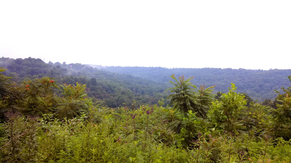 A South American jungle? Nope, just southern Ohio.